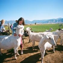 Amalthea Goat Farm